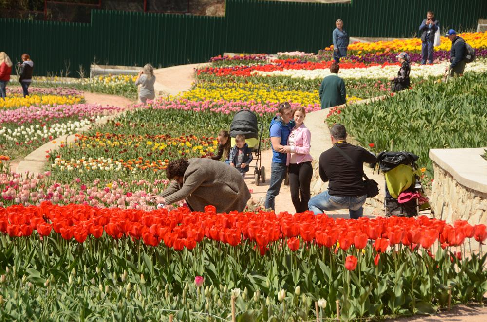 ПАРАД ТЮЛЬПАНОВ | Никитский ботанический сад